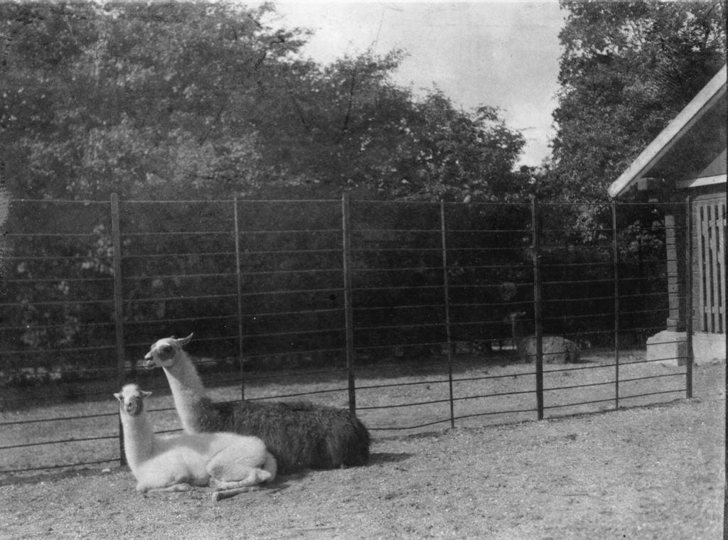59.25  Zoologisk Have 1928 2000 Frederiksberg  K-O 21.12.17