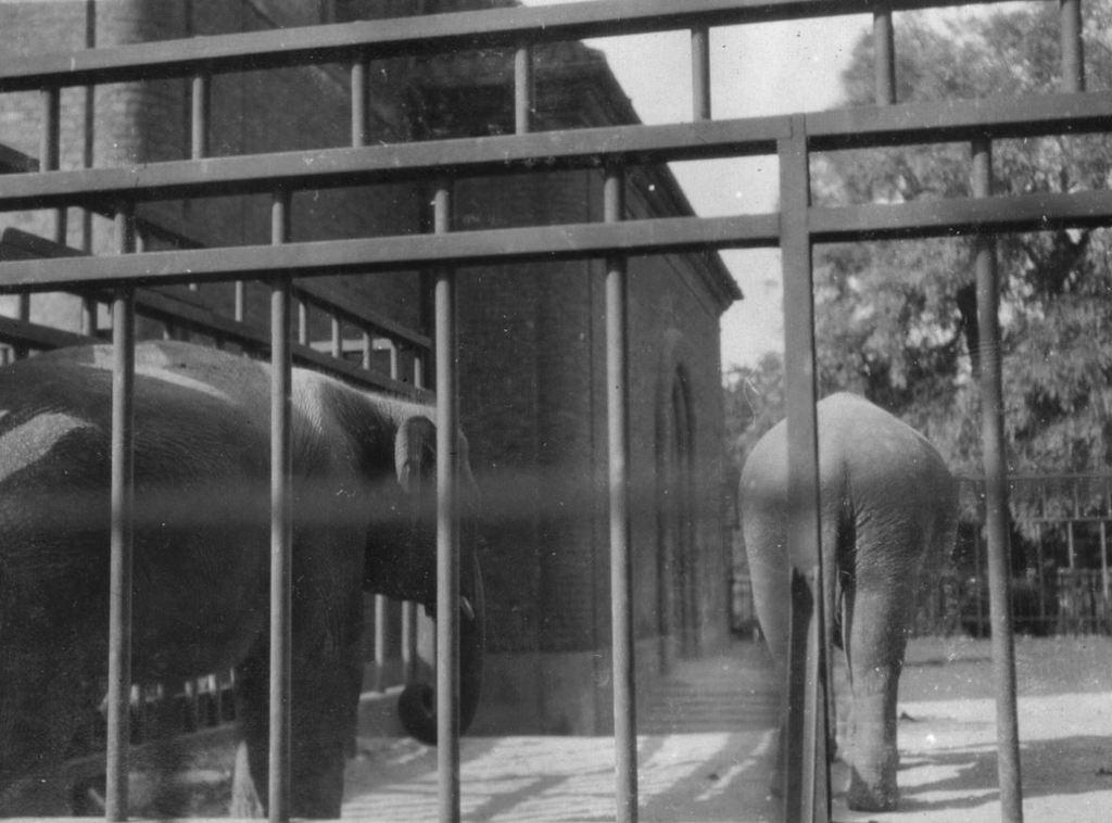 59.30  Zoologisk Have 1928 2000 Frederiksberg  K-O 21.12.17
