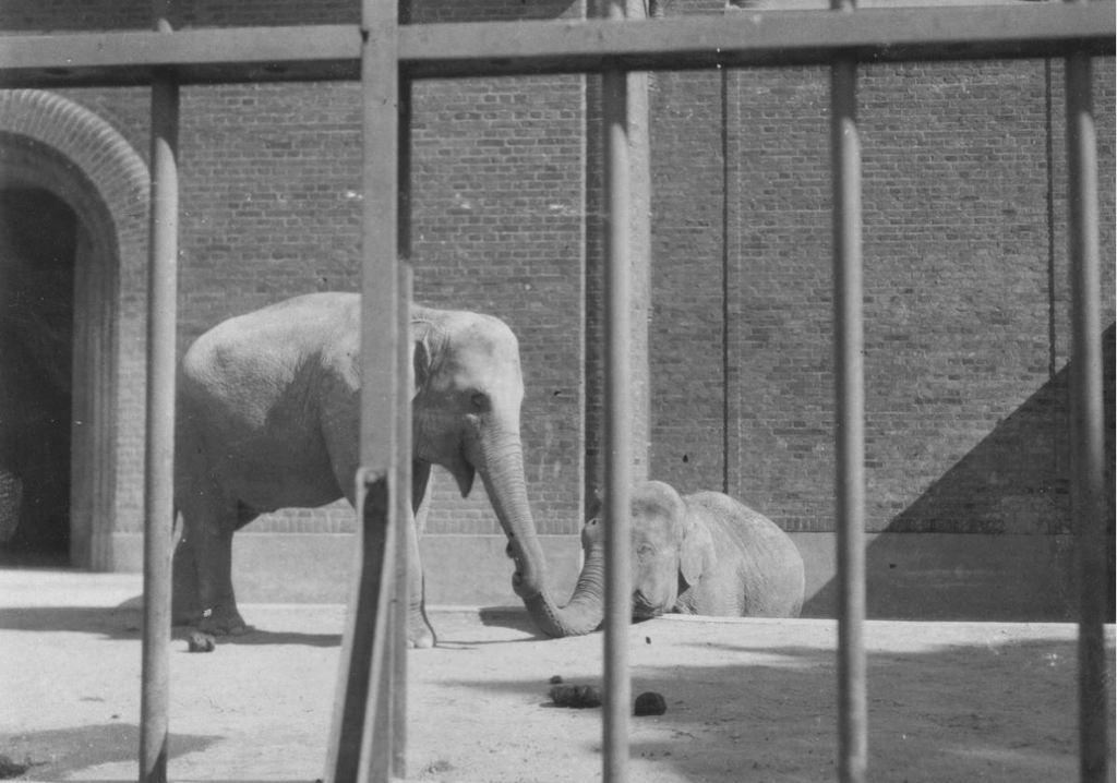 59.32  Zoologisk Have 1928 2000 Frederiksberg  K-O 21.12.17