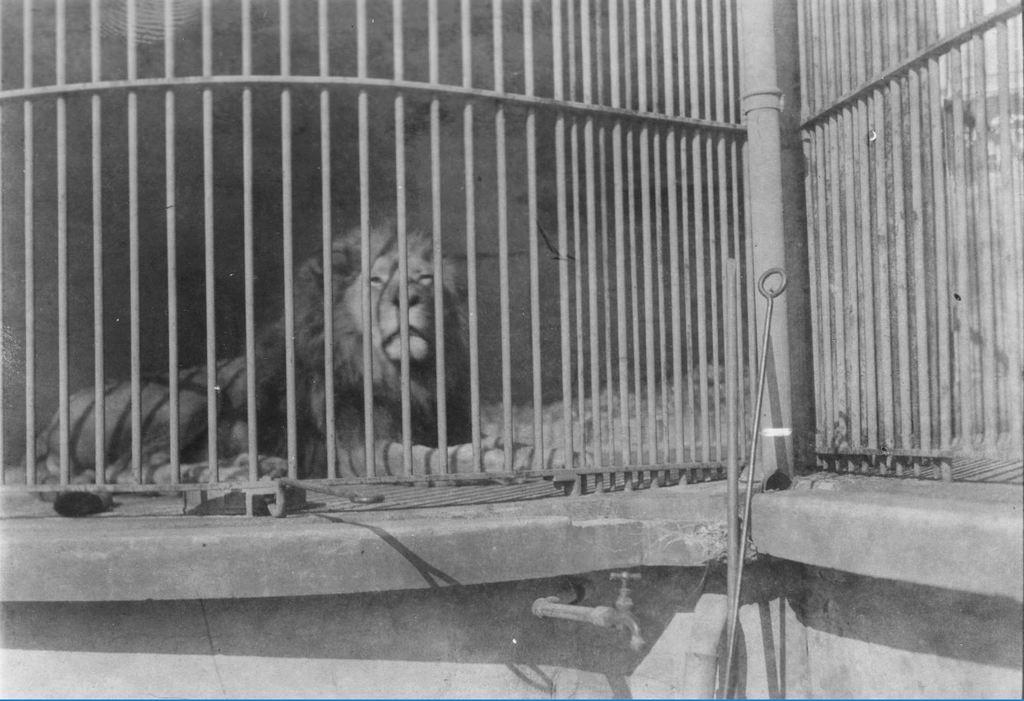 59.37  Zoologisk Have 1928 2000 Frederiksberg