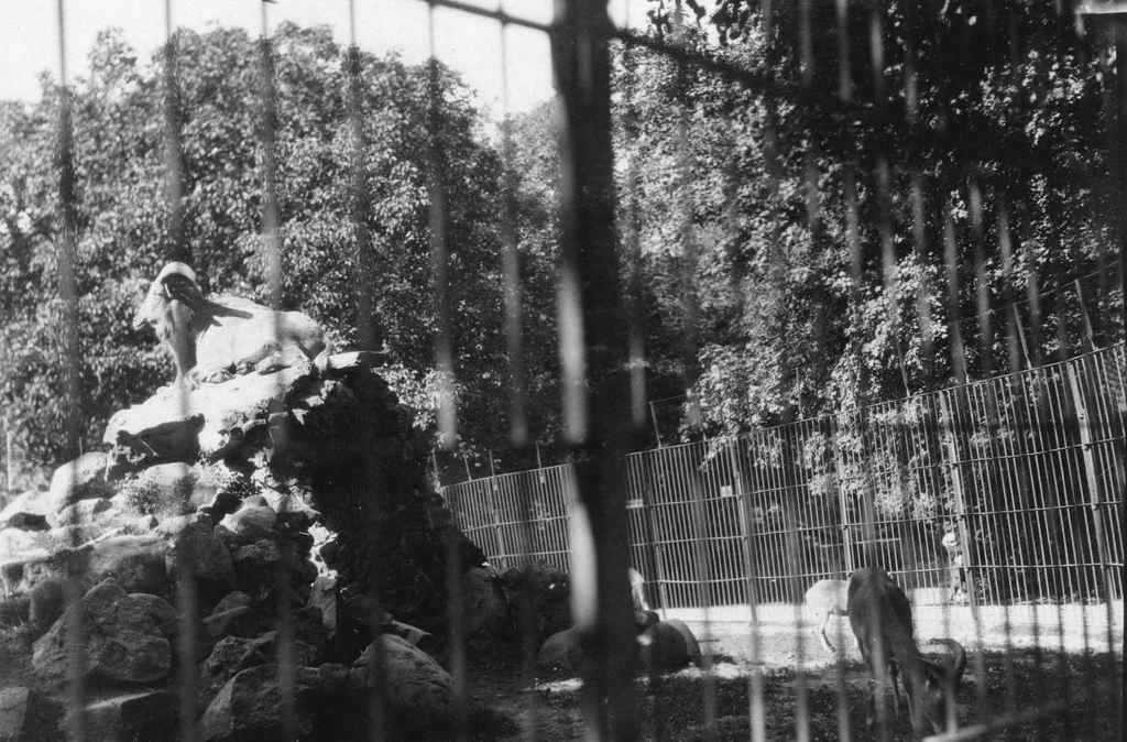 59.40  Zoologisk Have 1928 2000  K-O 21.12.17