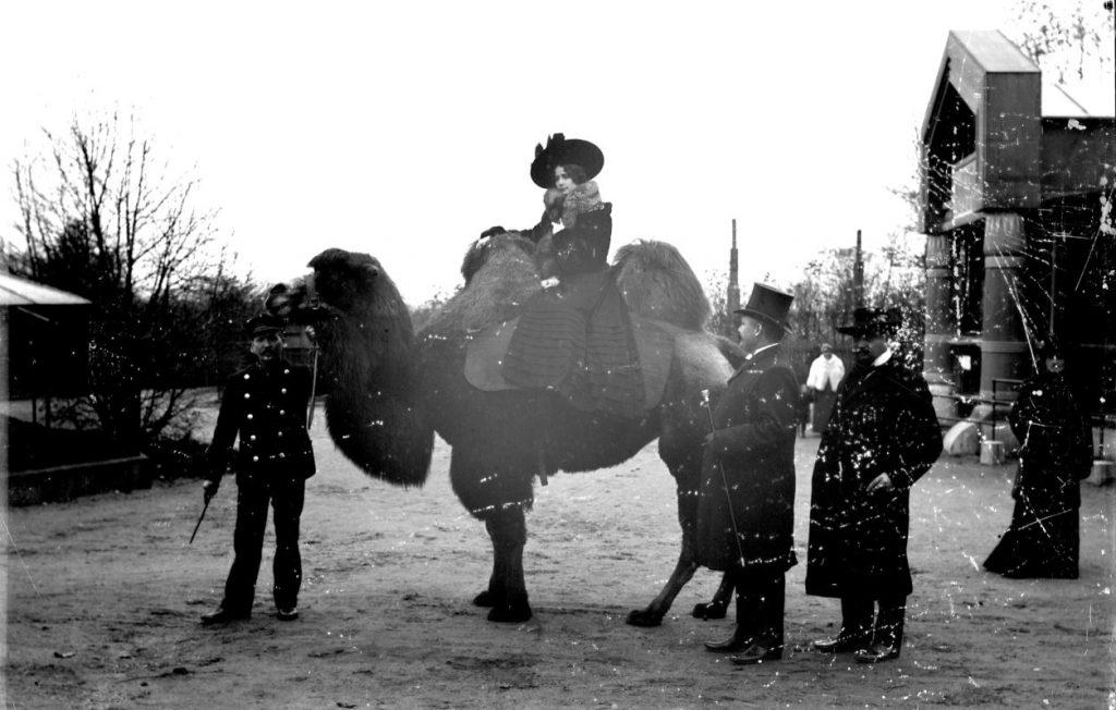 """10972.22 Fra Zoologisk Have - en kameltur - for """"Kameliadamen"""" (!). Foto H.J. Barby, som tog mange billeder i Zoologisk Have G.K. 20.5.2018  2000 F"""