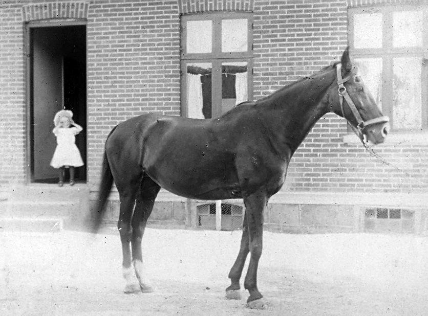 30.78  Juli 1908 i Allindelille.4370 St. Merløse